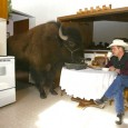 buffalo in kitchen