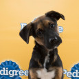 donnie puppy bowl