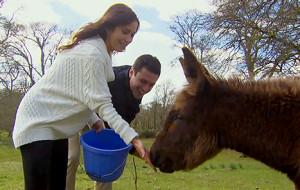 Kaitlyn-Ben-Donkey-467